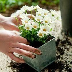 Quoi Planter En Automne : jardinage vos astuces sur page 5 ~ Melissatoandfro.com Idées de Décoration