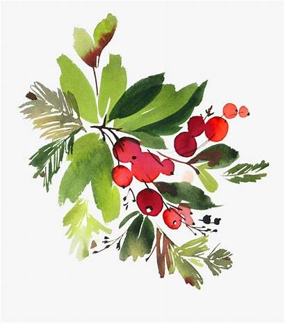 Watercolor Holly Flowers Floral Snowman Watercolour Clipart