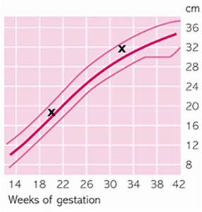 Baby Growth Curve Chart Fetal Growth Chart Familyeducation