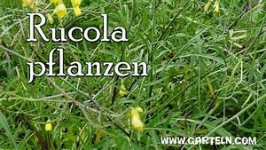 Wächst Rucola Nach : rucola selbst pflanzen tipps f r die aussaat am balkon und im garten youtube ~ Watch28wear.com Haus und Dekorationen
