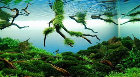 aquascape wallpaper beautiful aquascaping photo collection quertime