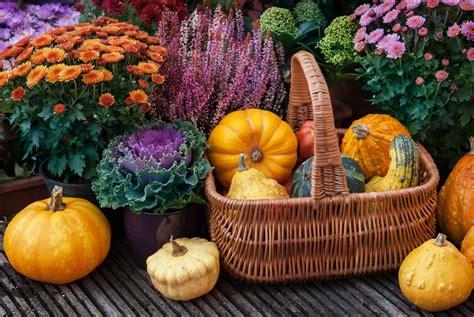 Garten Auch Im Herbst by Herbstblumen Die 10 Sch 246 Nsten F 252 R Ihren Garten Plantura