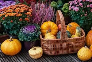 Garten Im Herbst : herbstblumen die 10 sch nsten f r ihren garten plantura ~ Watch28wear.com Haus und Dekorationen