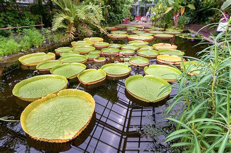 Botanischer Garten Berlin Dahlem Veranstaltungen by Botanischer Garten Bonn Fotos Botanischer Garten