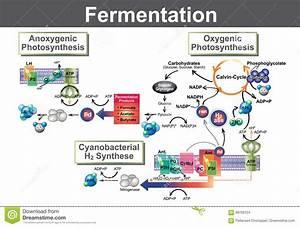 Fermentation Stock Vector  Illustration Of Bottle  Brewery