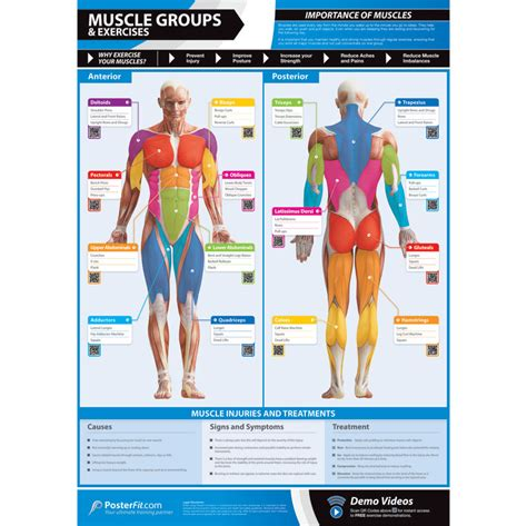 The soleus, which is the flatter, longer muscle running underneath the gastrocnemius and lower down your leg. PosterFit Muscle Groups & Exercises Poster