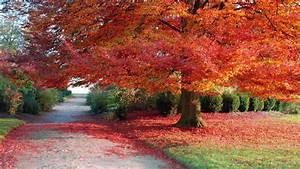 Kostenlose Bilder Herbst : download bilder f r das handy landschaft b ume herbst kostenlos 31938 ~ Yasmunasinghe.com Haus und Dekorationen