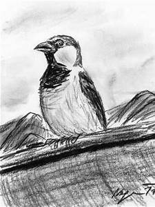 Bird Impressions by Christoph Neger: Some new sketches ...