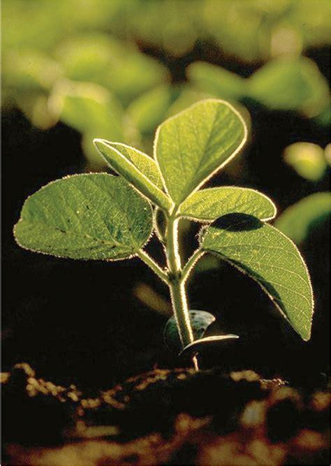 plant health initiative website redesign   easier
