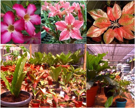 manfaat  kegunaan tanaman hias