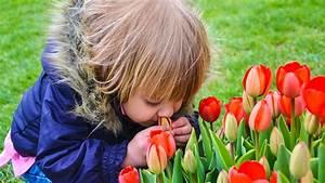 Kirschlorbeer Giftig Für Kinder : sind tulpen giftig oder nicht ~ Frokenaadalensverden.com Haus und Dekorationen