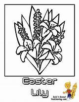 Easter Coloring Lily Flower Pages Lilies Yescoloring Luxurious sketch template