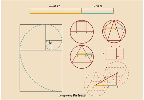 The Golden Ratio Sketch Template by Golden Ratio Proportions Download Free Vector Art Stock
