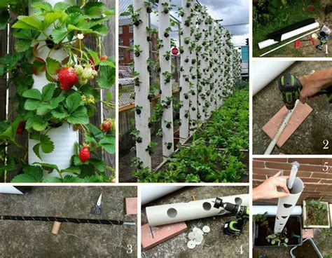 strawberry garden designs vertical strawberry tube planter for your small garden amazing diy interior home design
