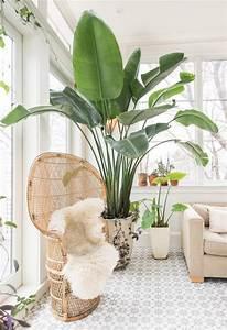 Große Zimmerpflanzen Pflegeleicht : ces plantes exotiques qui gayent un int rieur sh ko ~ Lizthompson.info Haus und Dekorationen