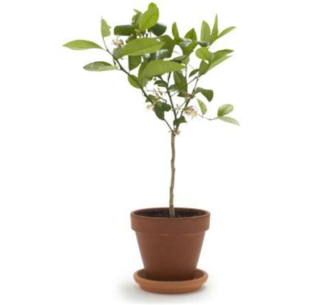 4 unique garden indoor plant ideas for your wedding