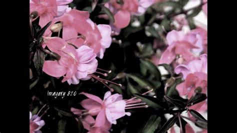 macro lens flower photography youtube