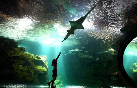 l aquarium la rochelle la rochelle 187 study abroad boston