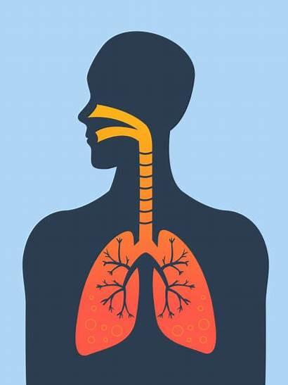 Asthma Vector Respiratory System Clip Illustrations Illustration
