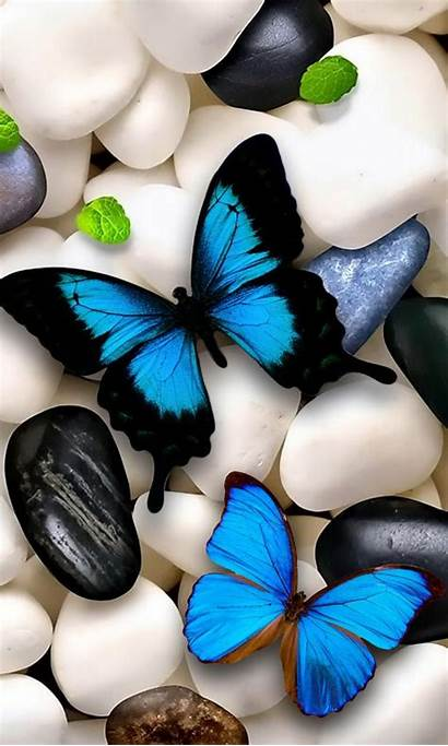 Butterfly Butterflies Mobile Zedge Wallpapers Tablet Backgrounds