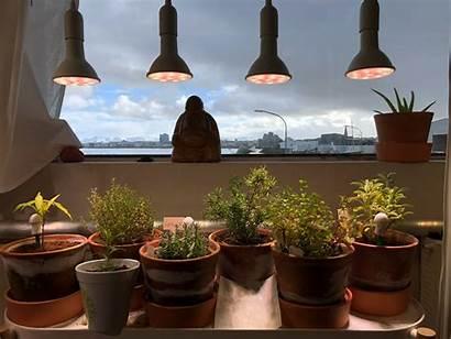 Grow Indoor Lights Plants Lighting Garden Sunlight