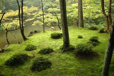 different types of japanese gardens file saihouji kokedera01 jpg wikimedia commons