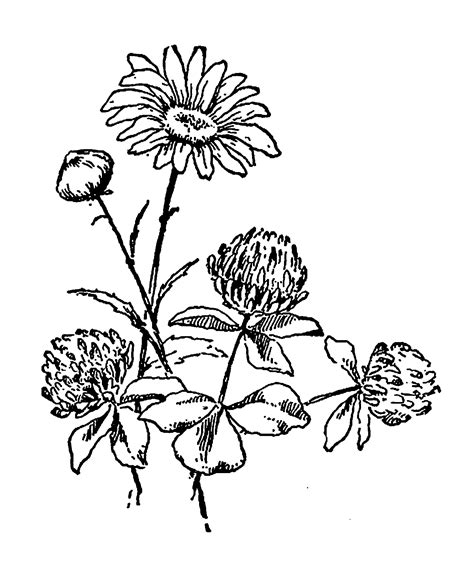 clipart illustrations digital st design digital wildflower