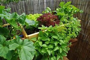 Gemüse Auf Dem Balkon : urban gardening auf dem balkon urban farming eigene ~ Lizthompson.info Haus und Dekorationen