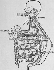 A  Salivary Digestion