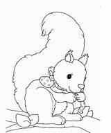 Squirrel Coloring Printable Animal sketch template