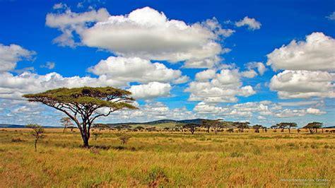 Hd Wallpaper Serengeti Park Tanzania Savannah Two Lonely