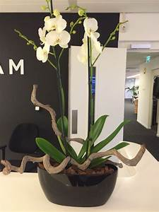 Orchideen Im Glas : orchidee planten en bloemen ~ A.2002-acura-tl-radio.info Haus und Dekorationen