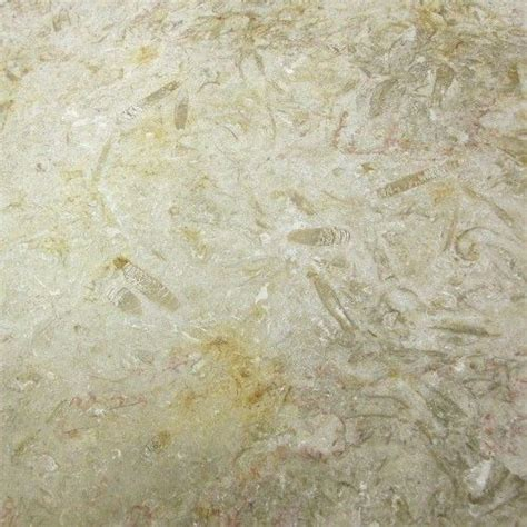 11 best images about countertops on fossil