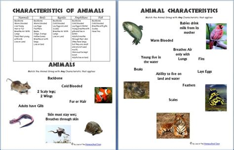 Science Worksheets: Animals and Their Characteristics