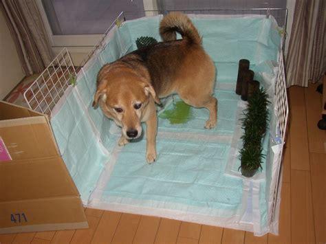 犬 の ウンチ トイレ に 流す