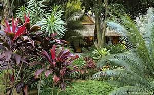 Plantes Exotiques Rustiques : plantes exotiques et tropicales pivoine etc ~ Melissatoandfro.com Idées de Décoration