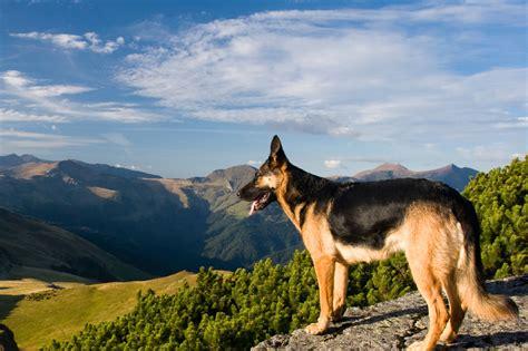 urlaub mit hund niederlande hundefreundliche hotels