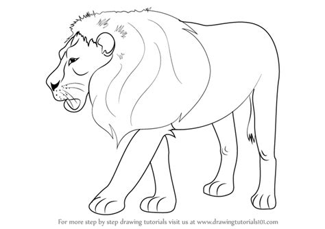 learn   draw  lion zoo animals step  step