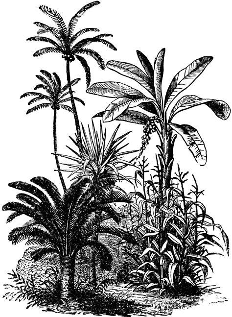 vegetation clipart