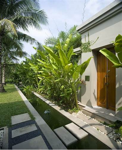 Modern Landscape Tropical Plants Tall Privacy Landscaping