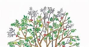 Kirschbaum Richtig Schneiden : walnussbaum schneiden mein sch ner garten ~ Lizthompson.info Haus und Dekorationen