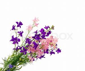 Bouquet of wild flowers isolated on white background ...
