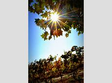 April Events in Temecula Valley Wine Country Temecula