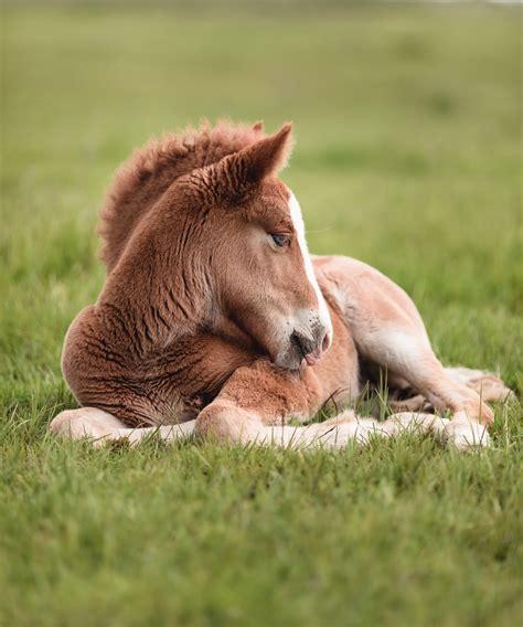 horse sleep horses place lovers