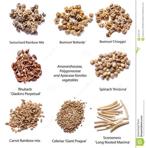 vegetables seeds stock image image of rooted botany