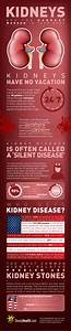 Kidneys Infographics Pictures  Photos  And Images For