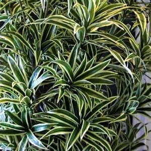 Pflegeleichte Zimmerpflanzen Mit Blüten : pflegeleichte zimmerpflanzen die auch sehr frisch und sch n aussehen ~ Sanjose-hotels-ca.com Haus und Dekorationen