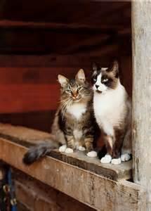 barn cat adopt a barn cat georgian triangle humane society