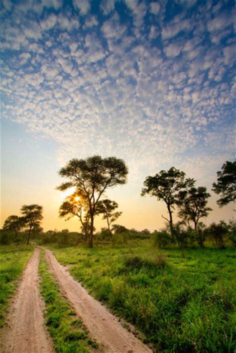 africa south flora fauna lioness kruger rain track flowers trees portrait steyn villiers