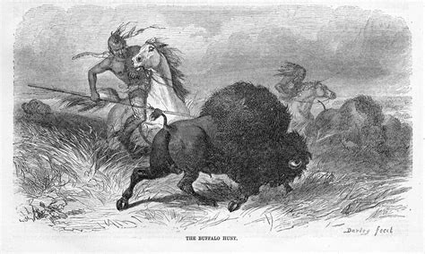 Indians Hunting Buffalo Hunt By Darley Warrior Indian